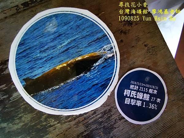 1090825多羅滿賞鯨IMG_20200825_122430 (640x480).jpg