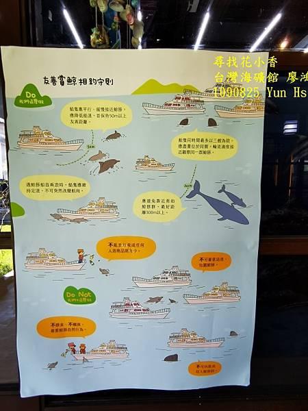 1090825多羅滿賞鯨IMG_20200825_123007 (480x640).jpg