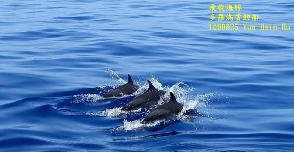 1090825多羅滿飛旋海豚2.jpg