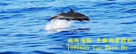 1090825多羅滿賞鯨飛旋海豚1.jpg