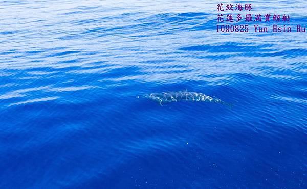 1090825抹香鯨DSCN1987-1.jpg