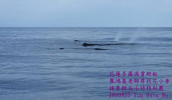 1090825抹香鯨抹香鯨2.jpg