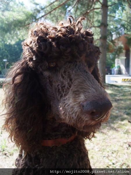 2009_0824hunde0144.JPG