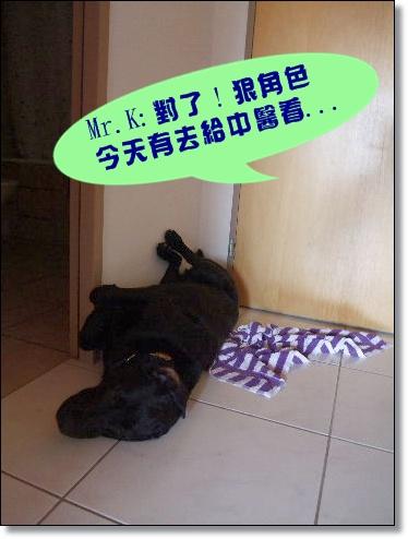 2009_0510hunde0025.JPG