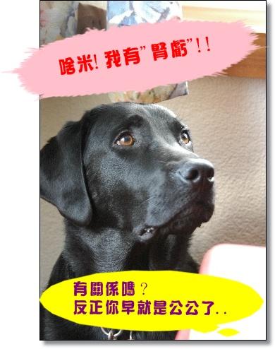 2009_0601hunde0165.JPG