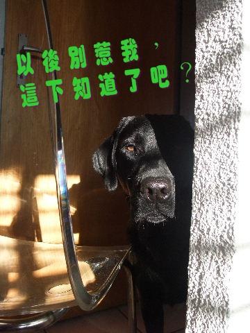 2009_0729hunde0050.JPG