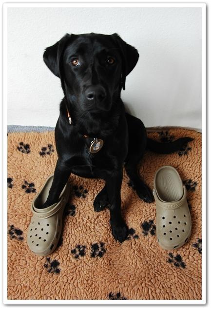 shoes (0).JPG