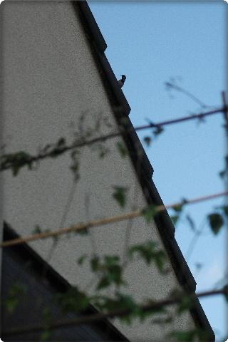 2010_0523NB0048.JPG