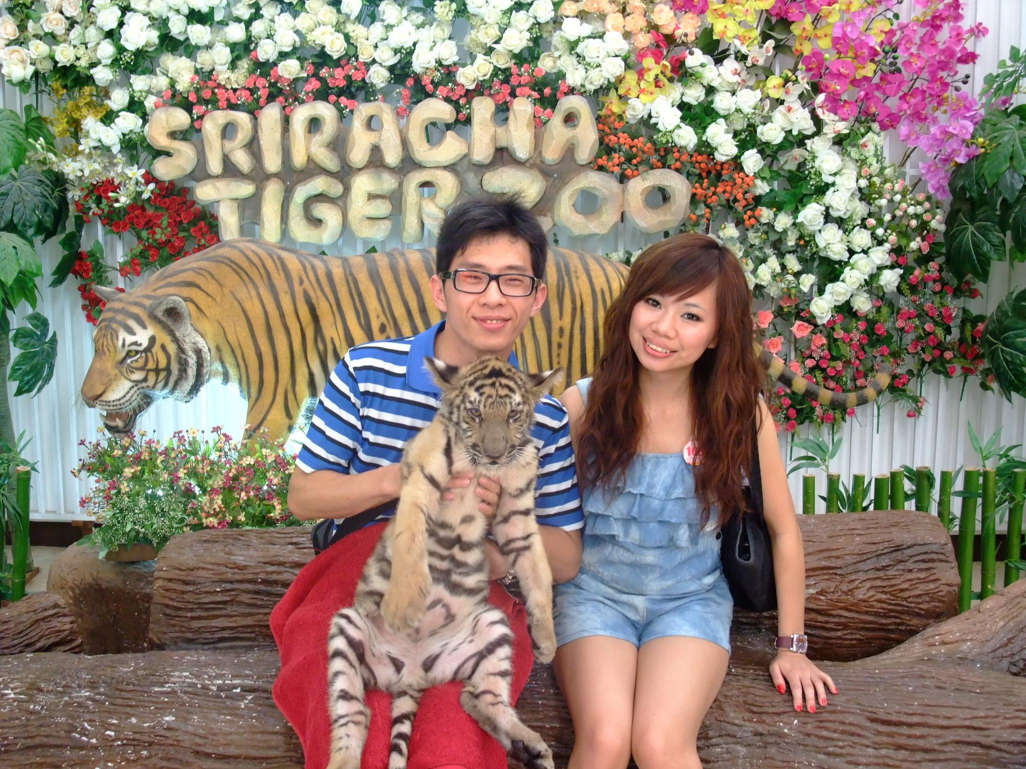 跟老虎拍照