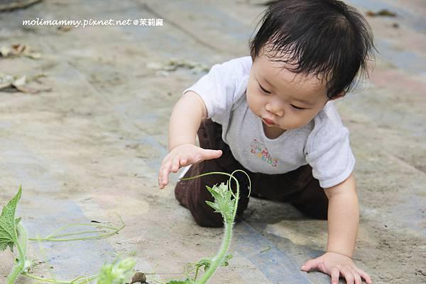 seeflower2_5.jpg