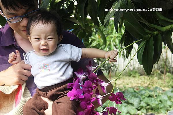 seeflower4_6.jpg