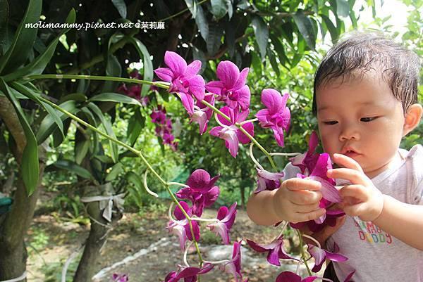 seeflower4_7.jpg