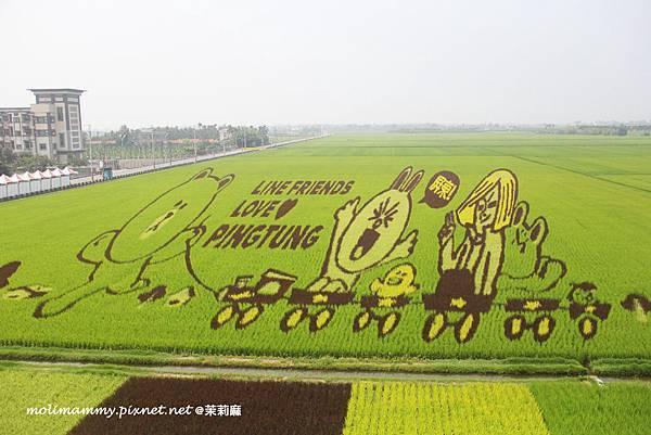 彩稻藝術6_6.jpg