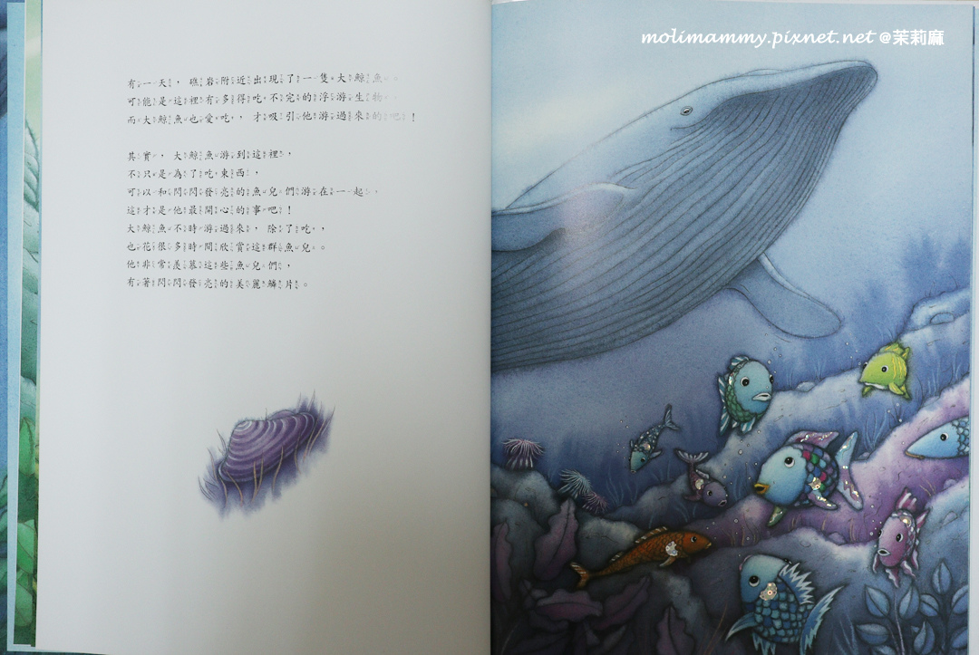 彩虹魚4_2.jpg