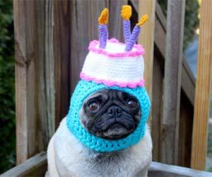 funny-dog-hats