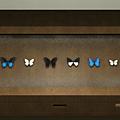 蝴蝶櫃.png