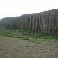 大果葉柱狀玄武岩