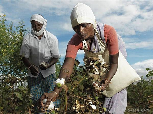 cotton-organic-farmers.jpg