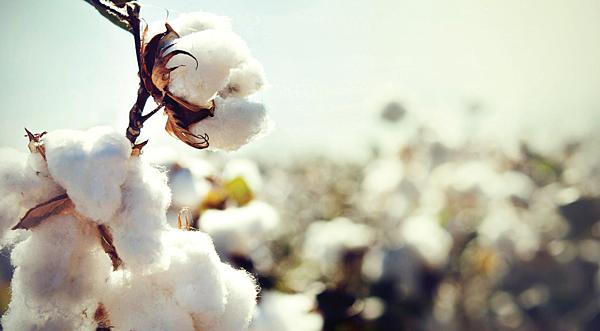 cotton_1024x1024.png