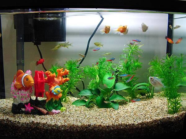 Aquarium0001.JPG