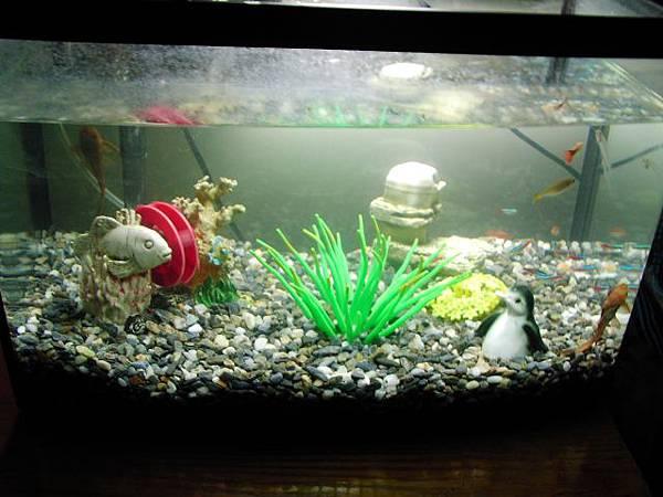 fishs0001.jpg
