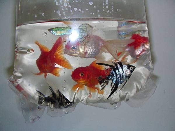 fishs0002.jpg