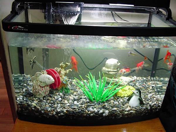 fishs0003.jpg