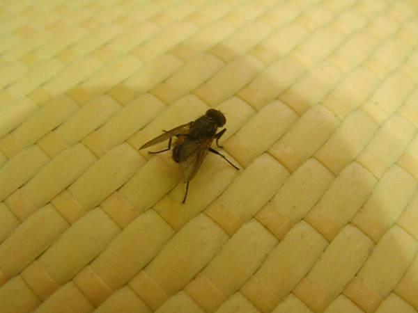 Housefly_0001.jpg