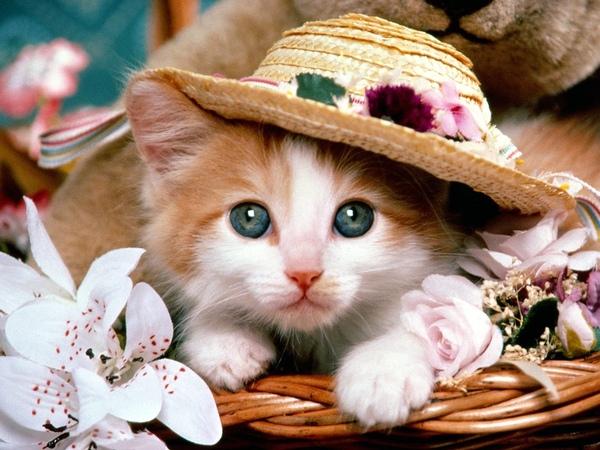 Cat_0001.jpg
