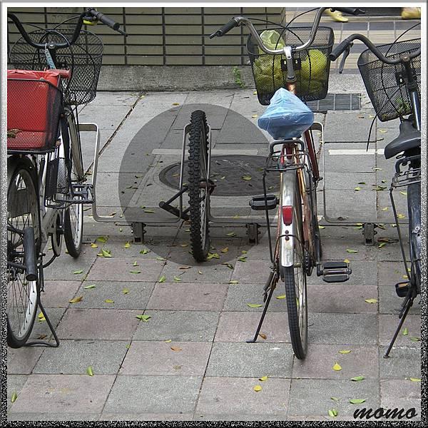 20110620小單輪-900x900.jpg
