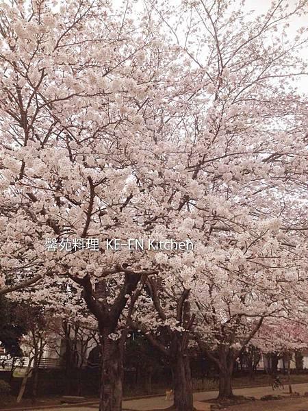 写真-2014-04-05-15-18-04