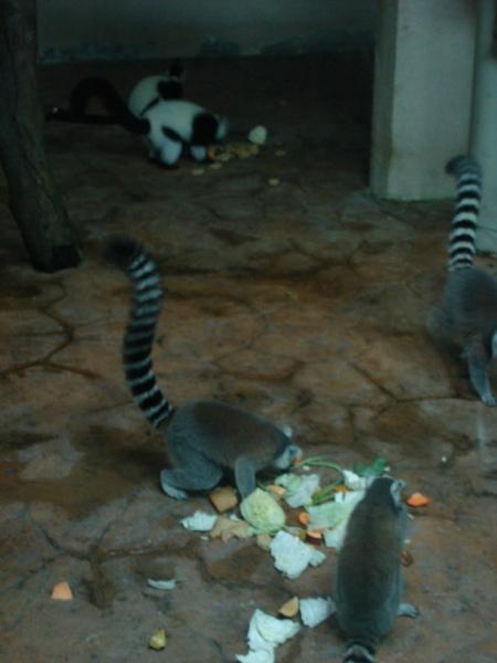 剛好是牠們的餵食時間