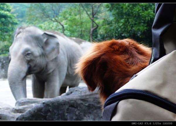 托托一直看大象..(什麼鬼= =?)