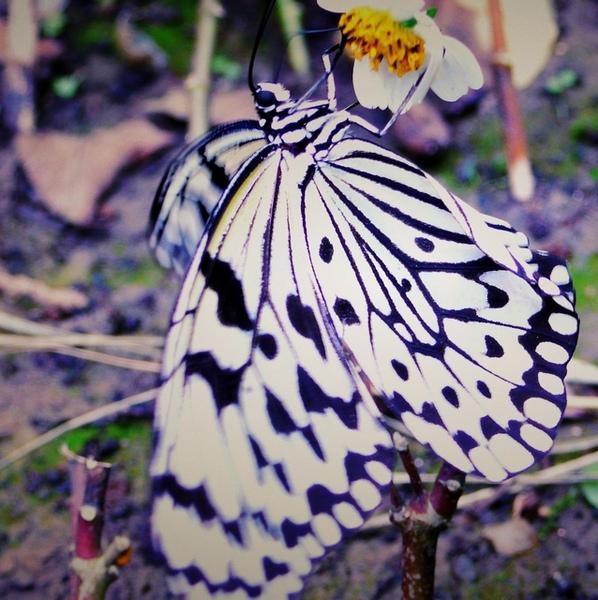 修片過的蝴蝶...更有FU了呢