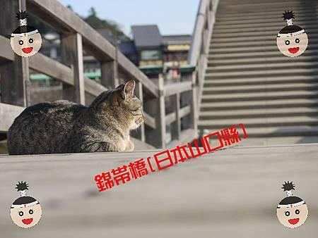 錦帶橋的貓