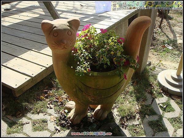 特別的花盆~