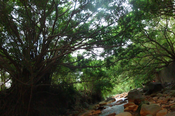溪上面的樹