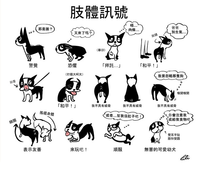狗狗的肢體語言