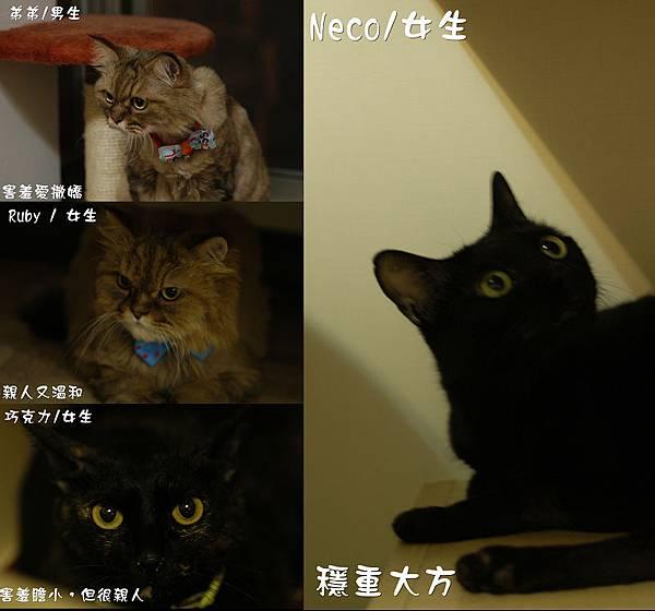 neco family