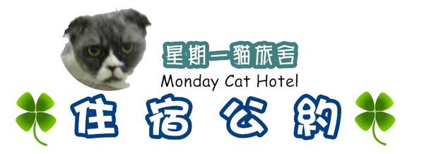 monday cat hotel