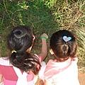 自然課時間 - 看看含羞草