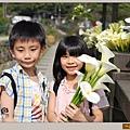 陽明山竹子湖海芋01