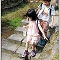 陽明山竹子湖海芋10
