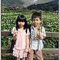 陽明山竹子湖海芋19