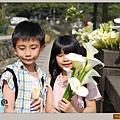 陽明山竹子湖海芋22