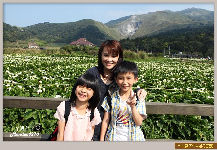 陽明山竹子湖海芋20