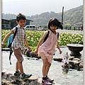 陽明山竹子湖海芋38