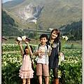 陽明山竹子湖海芋45