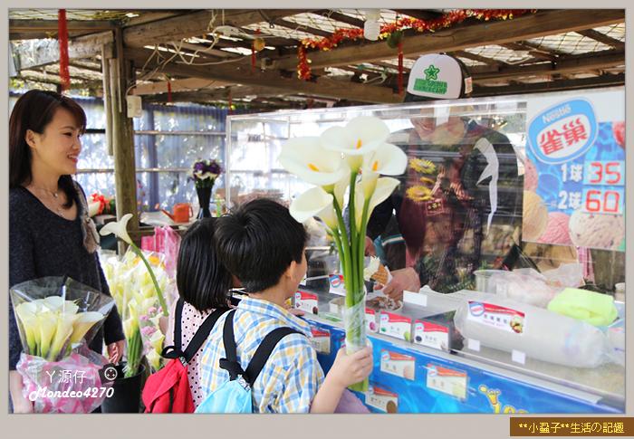陽明山竹子湖海芋49