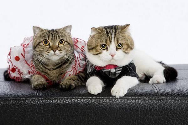 高雄自助婚紗 |喵星人 | 寵物婚紗照 | 貓咪婚紗 | 攝影 |推薦